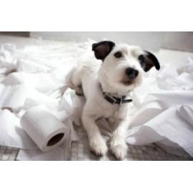 Пеленки, памперсы и туалеты для собак