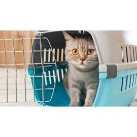 Сумки, переноски, клетки для кошек